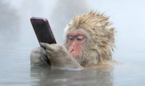Snow Monkey using iPhone by Marsel van Oosten